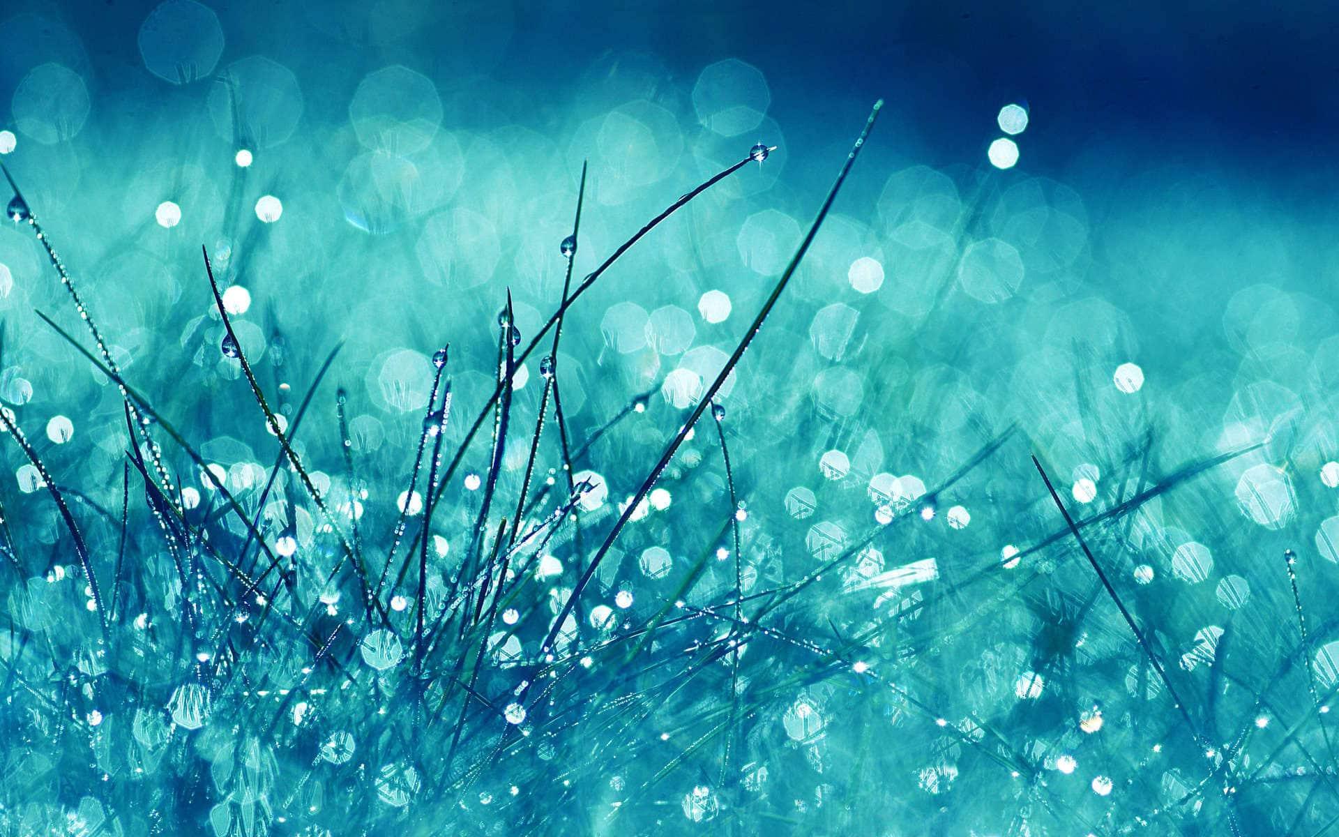 Grass Drops Dew Macro Nature