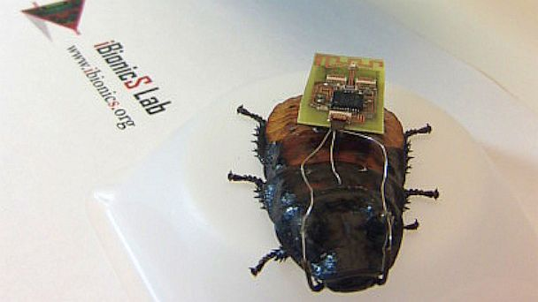 Ht Insect Biobot Kb 130626 16x9 608